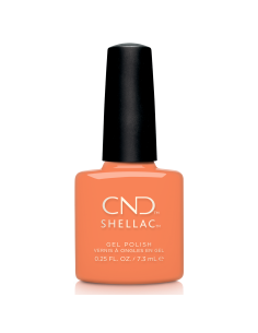SHELLAC-352 CATCH OF THE...